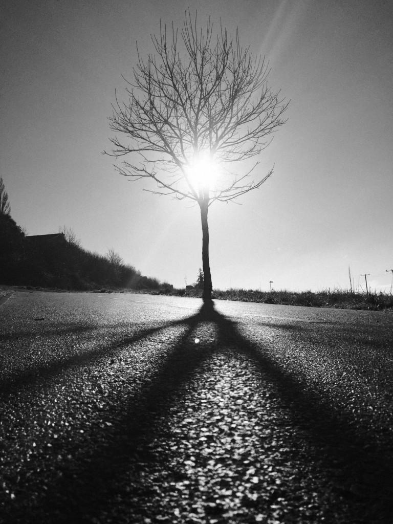 sun-softly-soothing_15826362514_o